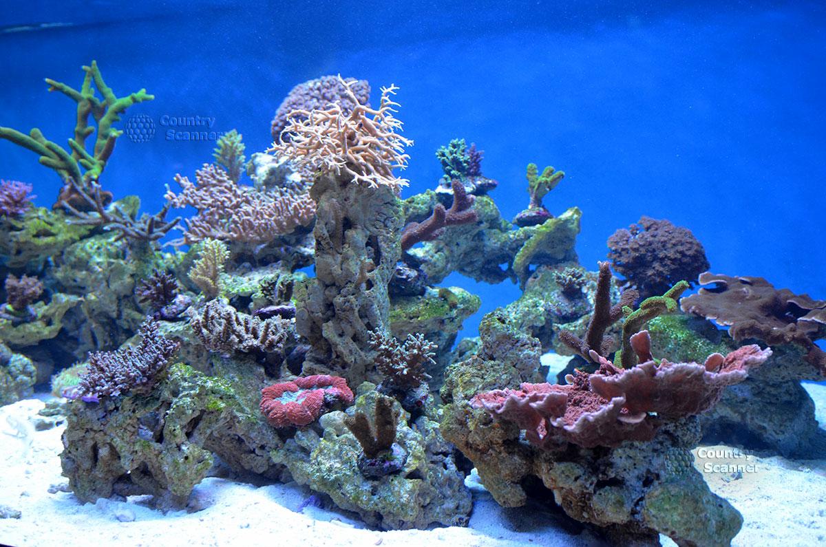 Морской аквариум. Тропические рифы.