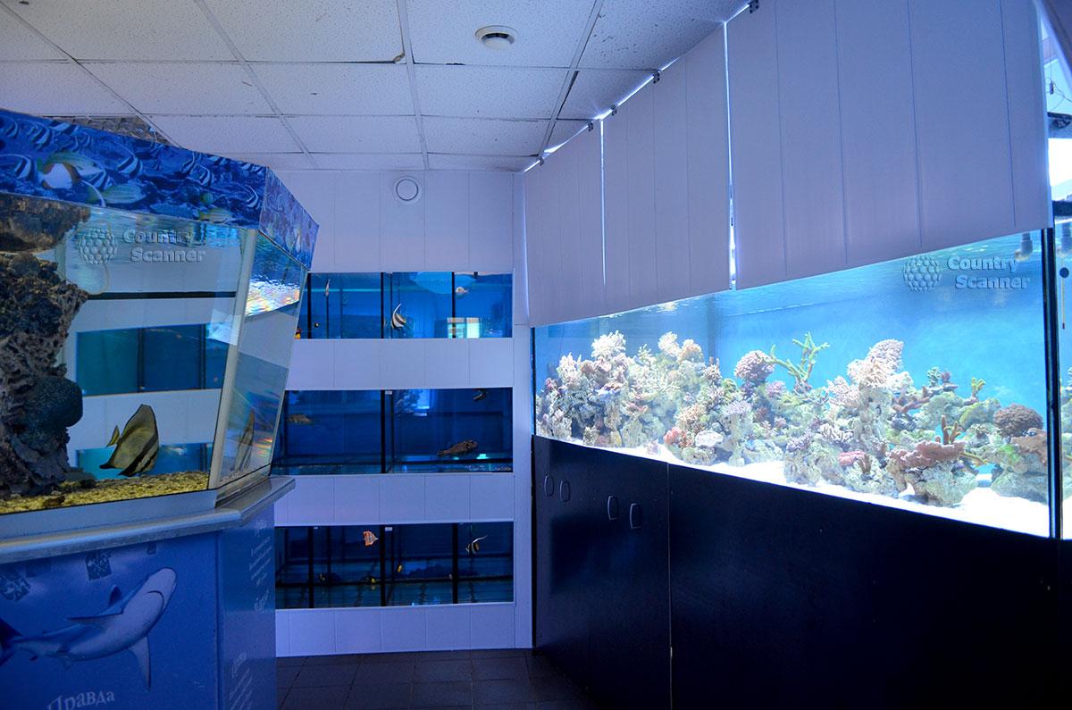 """Выставка """"Корраловый сад"""" в морском аквариуме на Чистых прудах."""