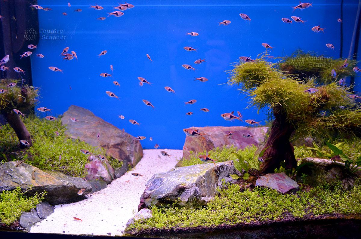 Морской аквариум на Чистых прудах. Классические виды аквариумных рыб.