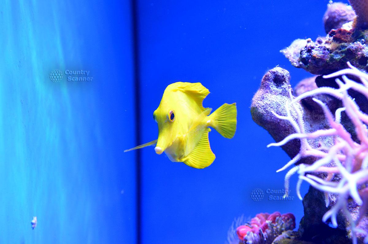 Яркий питомец Морского аквариума на Чистых прудах.