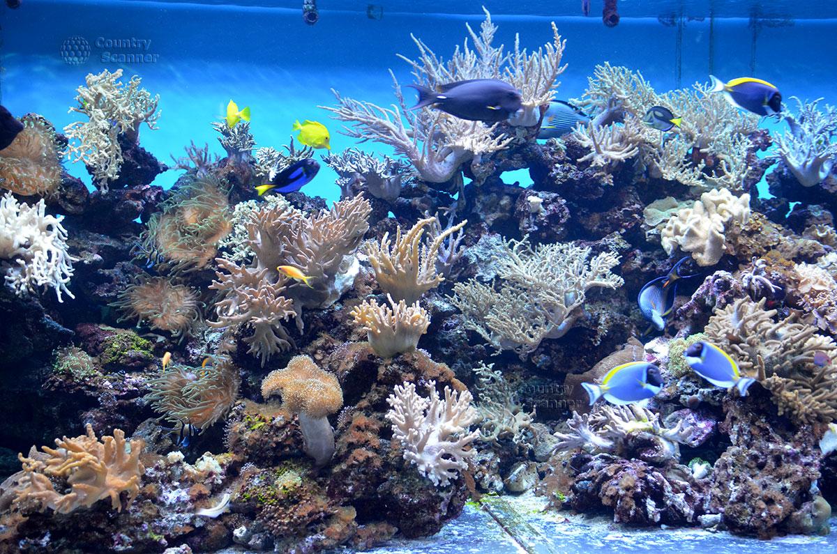 Морской аквариум. Яркие тропические рыбки.