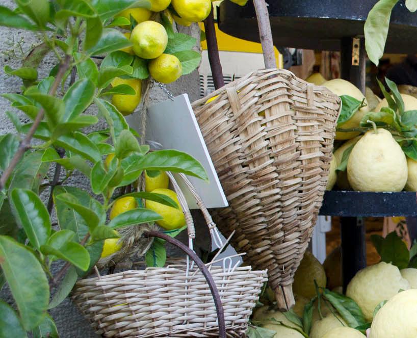 Новость 22-04-2017 Фестиваль лимонов состоится 29 апреля на Мадейре