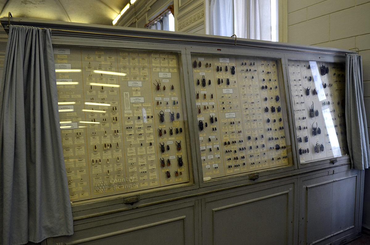 Экспозиция разнообразных жуков коллекции насекомых зоологического музея. Жуки от долей сантиметра до 15 сантиметров представляют огромное количество разновидностей.