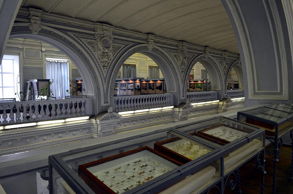 Галерея на хорах зоологического музея выбрана для размещения обширной коллекции насекомых. Горизонтальные стенды вмещают собрание бабочек со всего света.