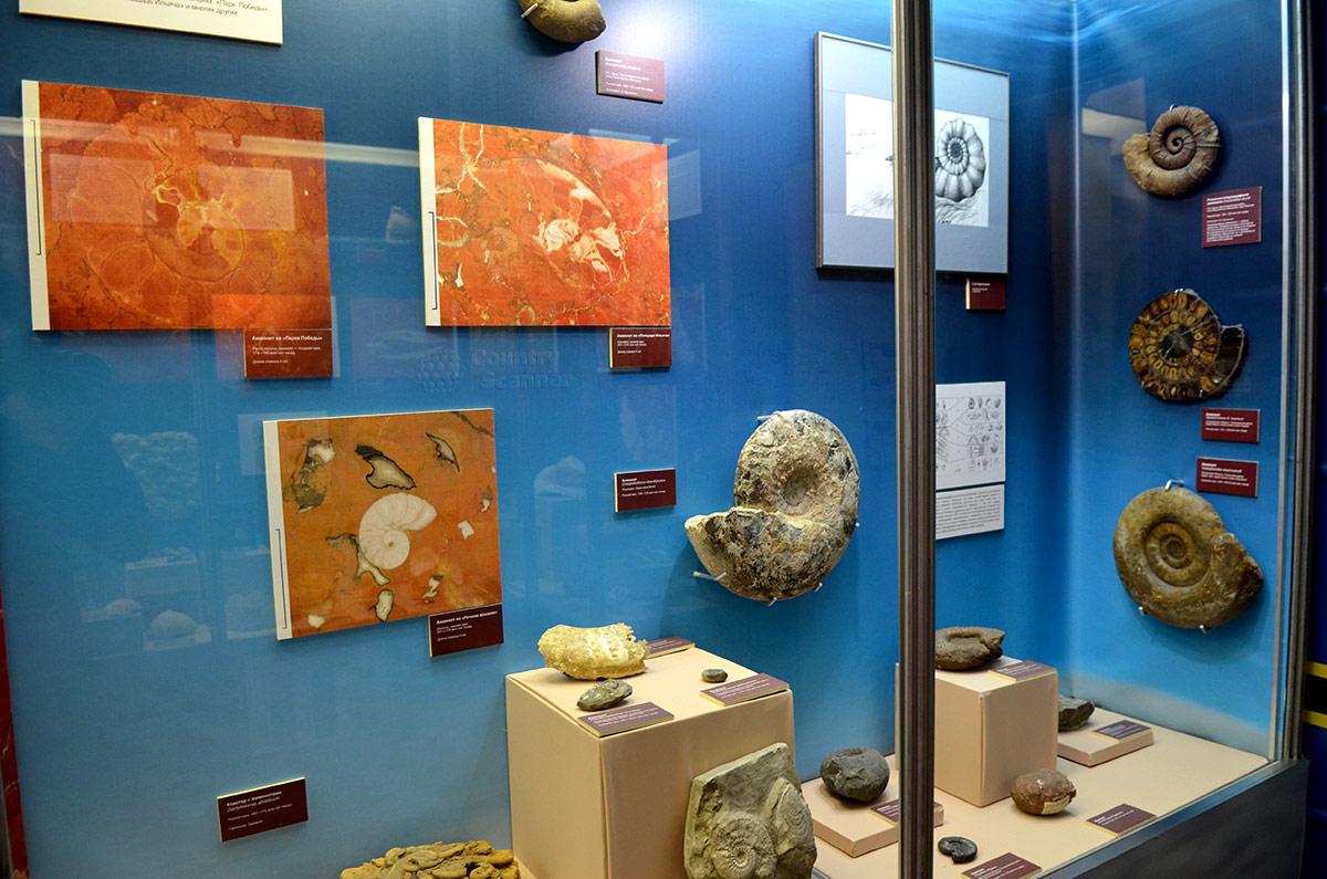 Одними из древнейших обитателей морей, пресных водоемов и суши были разнообразные моллюски. Раковины этих существ широко представлены в экспозиции музея Тимирязева.