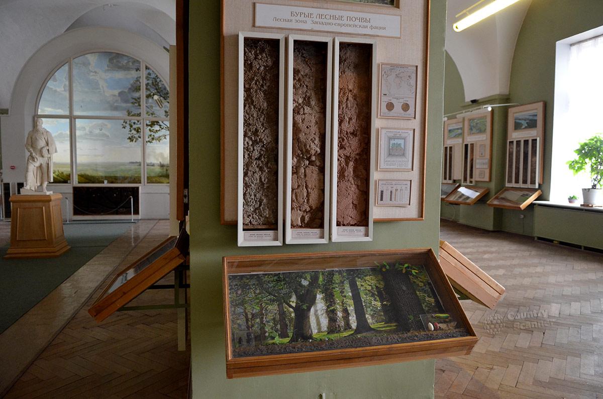 Подробная экспозиция музея почвоведения, посвященная одному из самых распространенных почвенных типов. Бурые лесные почвы представлены натуральными образцами и информацией.