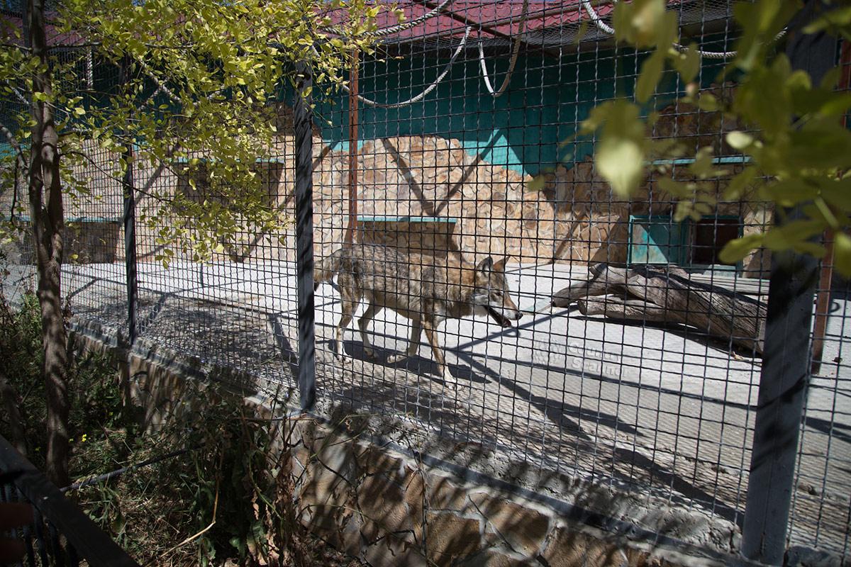 Парк львов Тайган. Волк.