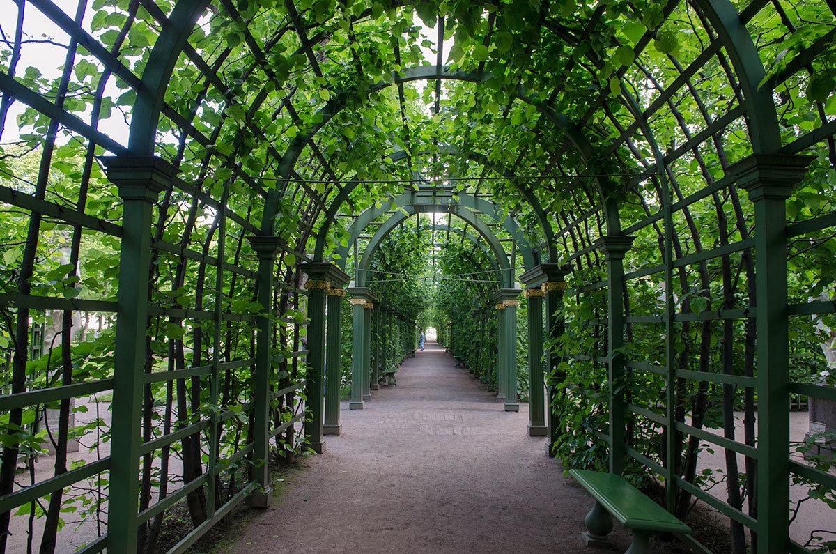 Один из элементов ландшафтного дизайна в летнем саду – галерея из вьющихся растений на решетчатом каркасе – берсо.