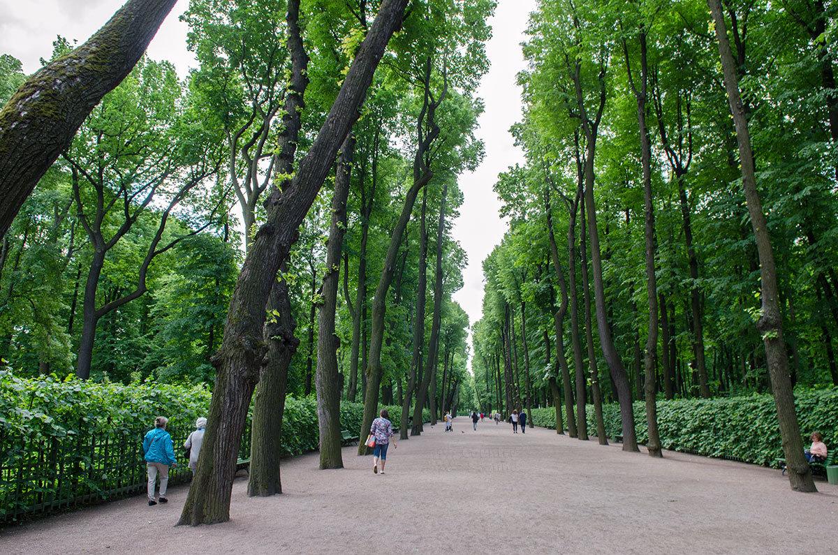 Липовая аллея 200-летних деревьев, сохранившихся среди растительности летнего сада, в окружении живых изгородей.