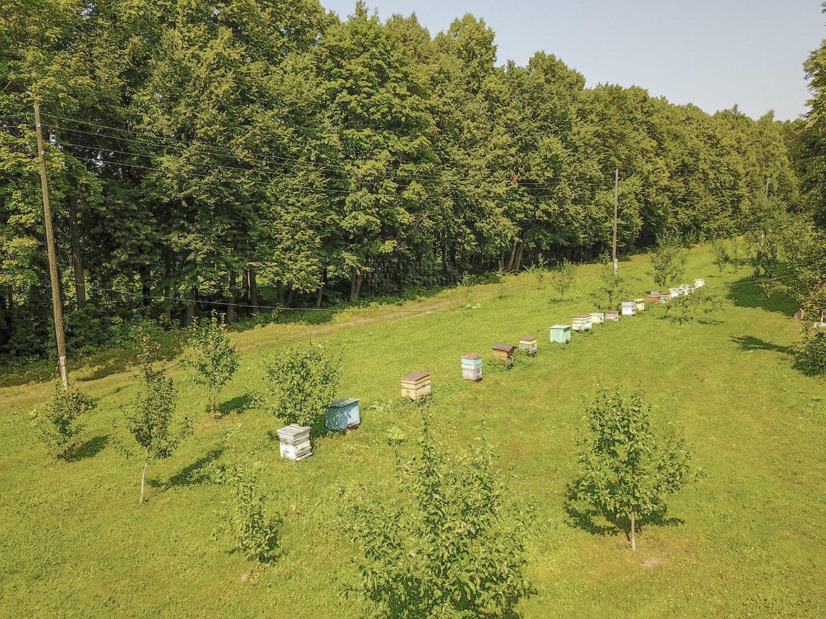 Выстроившиеся в ряд вдоль лесополосы пчелиные ульи, все раккрашенные по-разному – отличие пасеки усадьбы Болотова.
