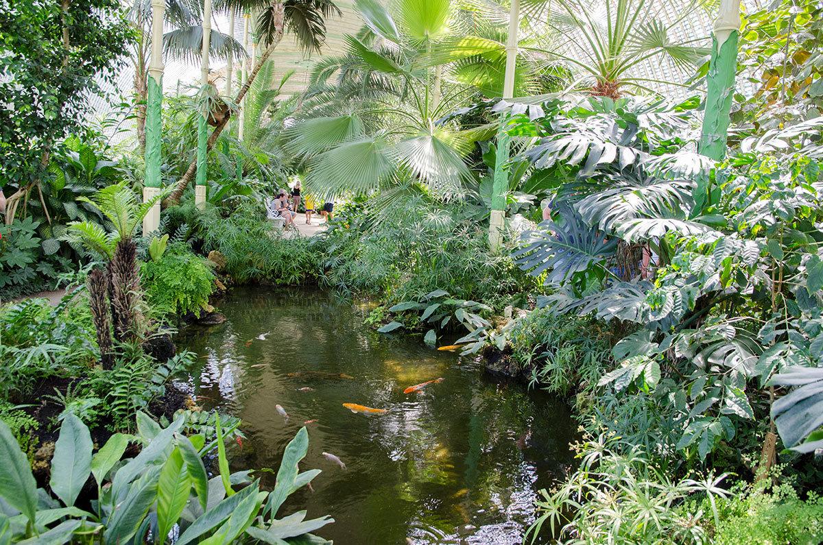 Пруды среди растительности внутри оранжереи замка Леднице прекрасно подходят для обитания экзотических рыбок.
