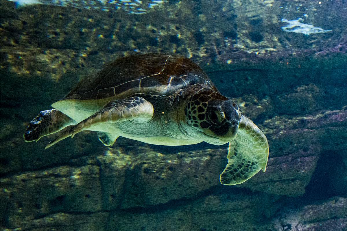 Аквариум Крита. Черепаха.
