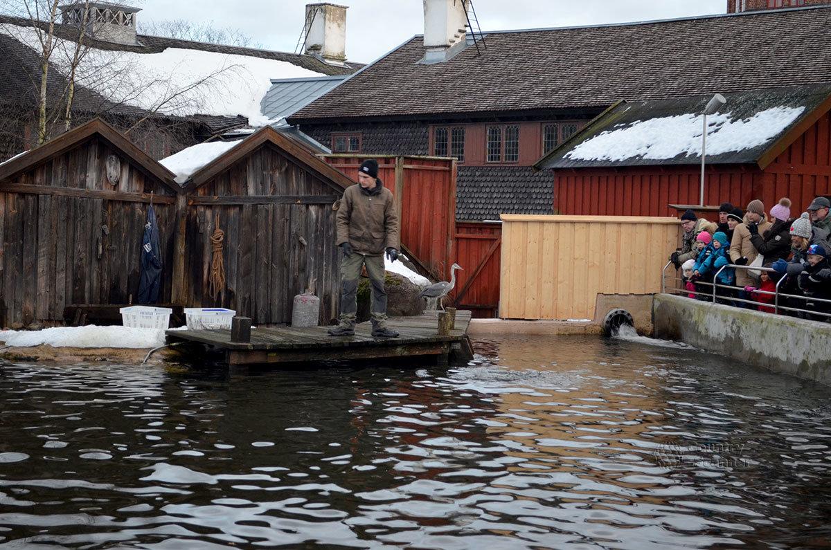 Бассейн для содержания морских животных музея Скансен привлекает много публики при кормлении тюленей живой рыбой.
