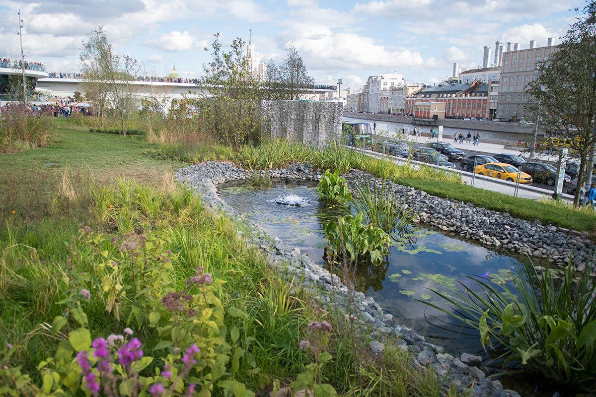 На фоне парящего смотрового моста парка Зарядье – пейзаж заливных лугов, водные и прибрежные растения маленького пруда.
