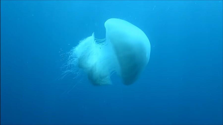 Огненные медузы появились на пляжах Таиланда