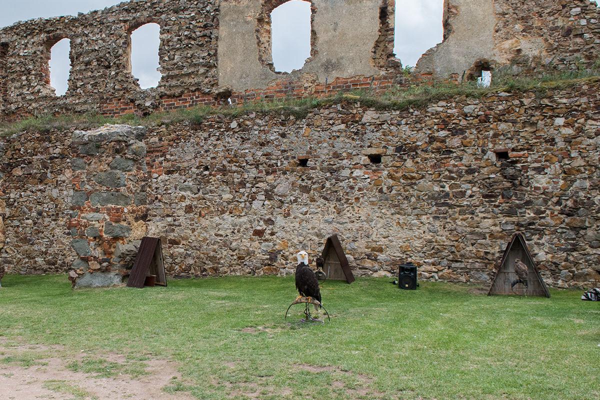 На всю Чехию замок Точник прославился проведением охот с обученными хищными птицами.