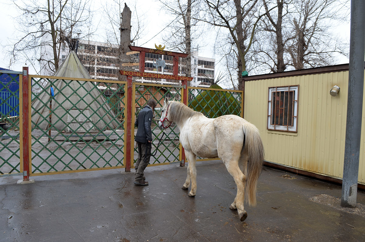Катание на лошадях музей кочевой культуры предлагает всем заинтересованным, наиболее популярно это развлечение у юных посетителей.