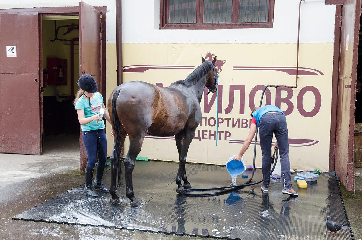 Конно-спортивная школа доверяет своим юным питомцам участие в необходимых лошадям гигиенических процедурах.