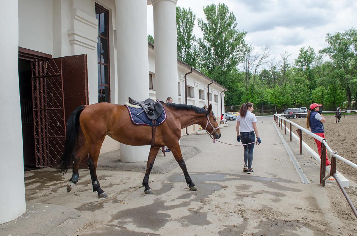 Вывод лошадей из конюшен конно-спортивной школы производится через боковой вызод, украшенный парными колоннами.