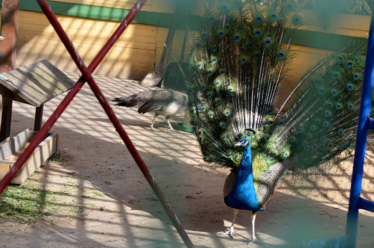 птицы в кусково фото хочу пожелать всегда