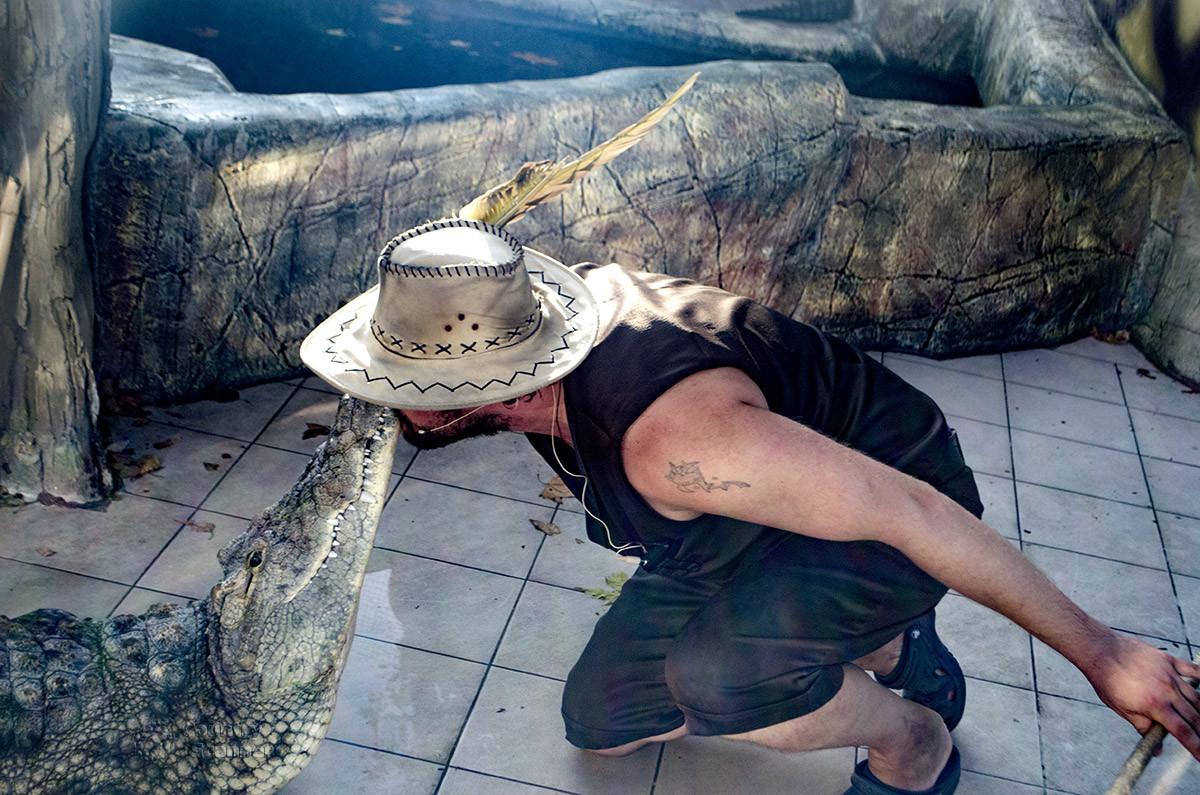 crocodile-show-countryscanner-2.jpg