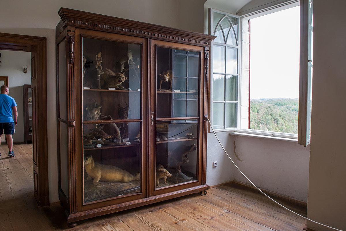 Шкаф с чучелами млекопитающих в таксидермической коллекции, собранной хозяевами замка Битов.