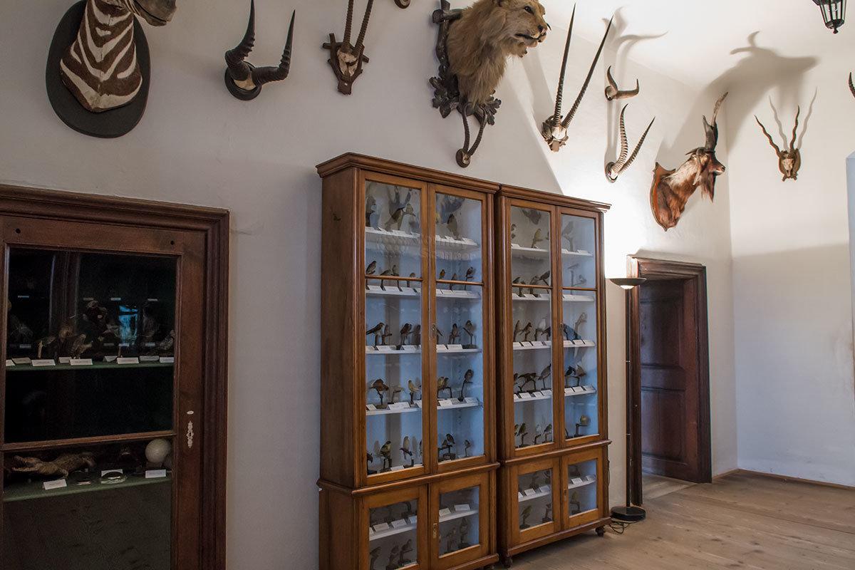 Экзотическая часть коллекции замка Битов содержит чучела миниатюрных птиц, наверху – головы зебры, льва и дикого козла, рога разных форм.