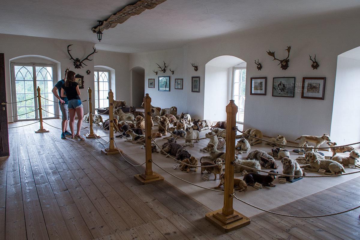 Увлеченный собаководством барон Иржи Хаас не только держал в замке Битов больше сотни животных, но и хранил около 50 их чучел.