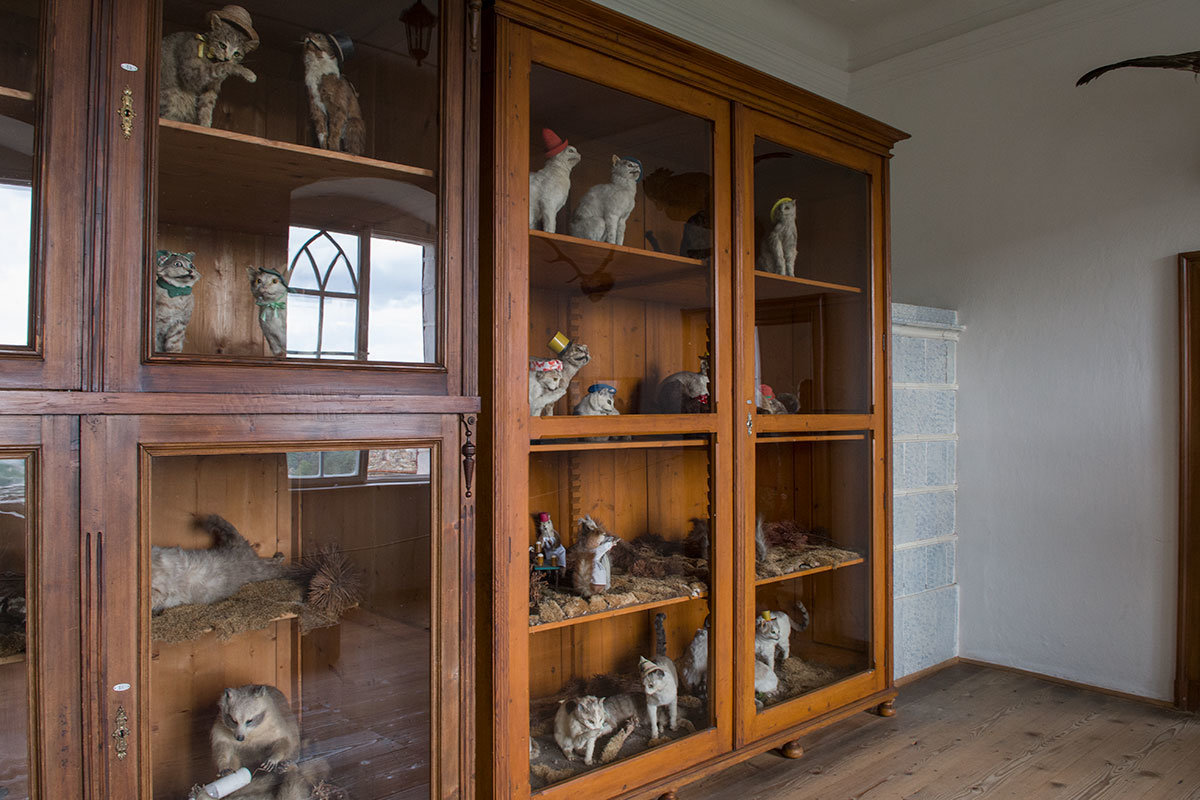 В составе коллекции замка Битов, кроме собачьих, имеются и чучела любимых хозяевами кошек.