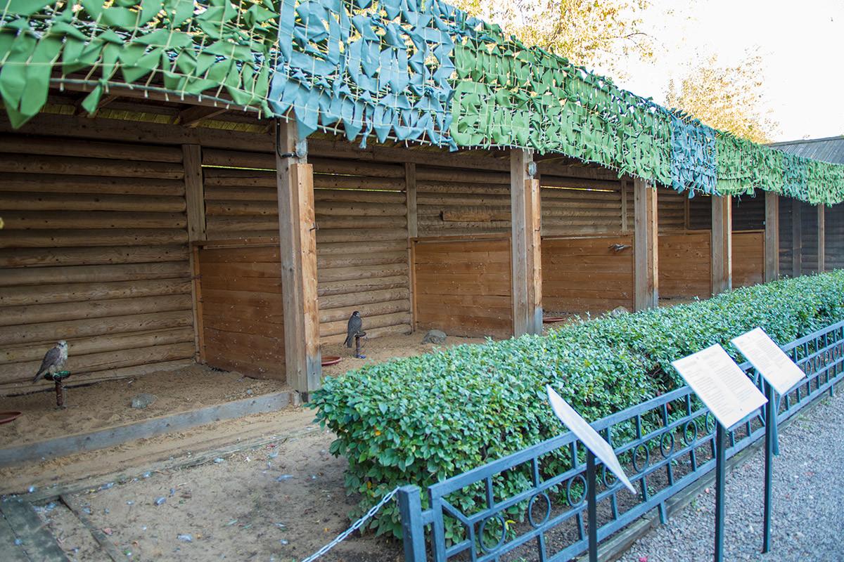 Соколиный двор в крестьянском подворье коломенского содержит дрессированных хищных птиц в деревянной вольере, на привязи.