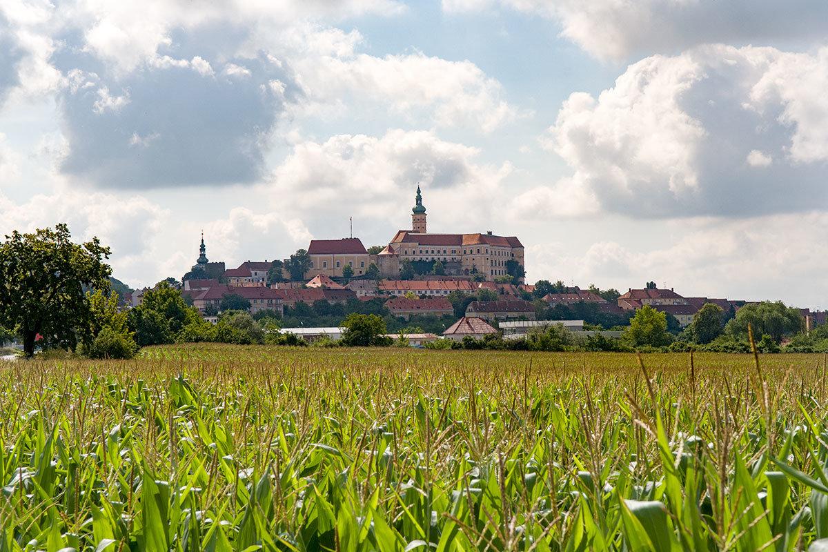 Расположенный на холме посреди сельскохозяйственных угодий, замок Микулов возникает на горизонте на большом расстоянии.
