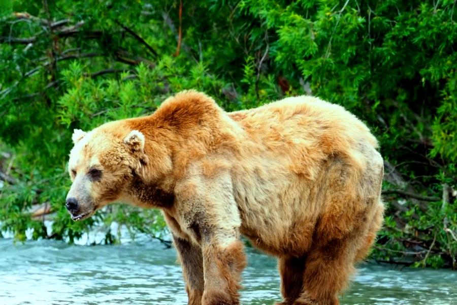 Туры на Камчатку и Сахалин можно купить от 64 000 рублей