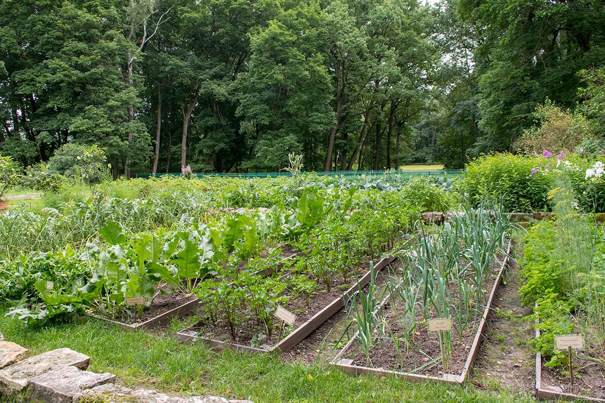 Грядки с овощами, пряными и лекарственными травами сохранены в усадьбе Ясная Поляна в память о многочисленных фермерских начинаниях владельца.