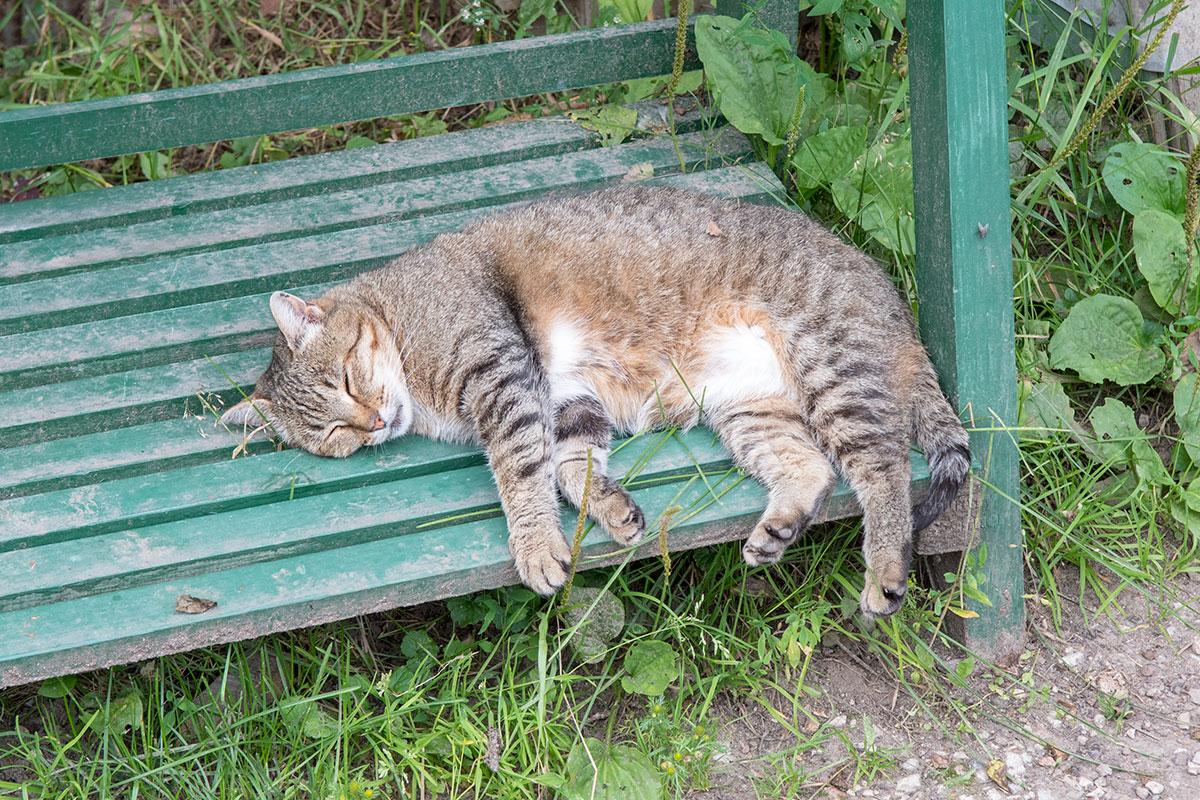 Шуточная фотография спокойно спящего обитателя усадьбы Ясная Поляна сделана нашими корреспондентами в конце визита.