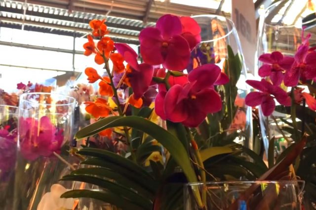 Новость 10-05-2018 Первый в мире Музей орхидей открывается в Вологде