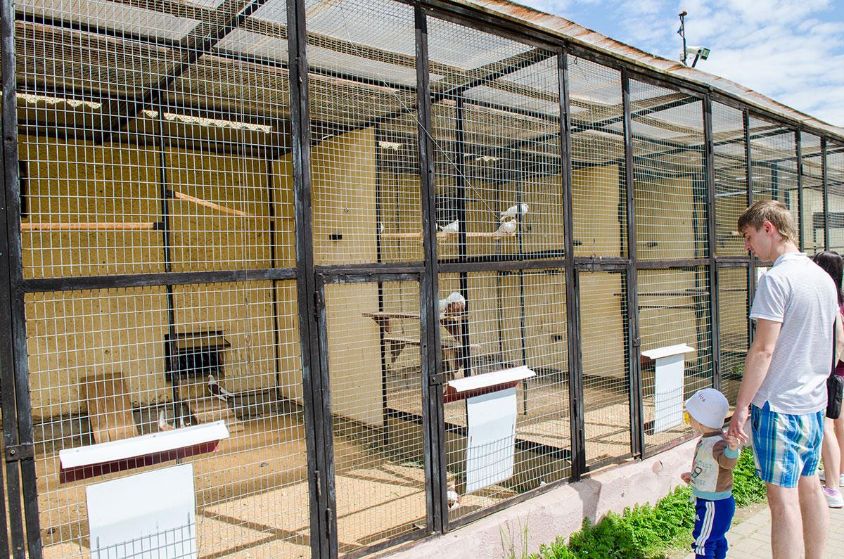 Вольеры для пернатых обитателей парка птиц Воробьи огорожены крупной сеткой и оборудованы насестами на различной высоте.