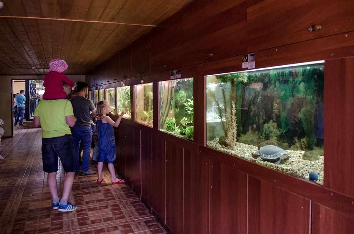 Экзотариум парка птиц Воробьи оборудован множеством аквариумов и террариумов, где содержатся обитатели водоемов и их берегов.