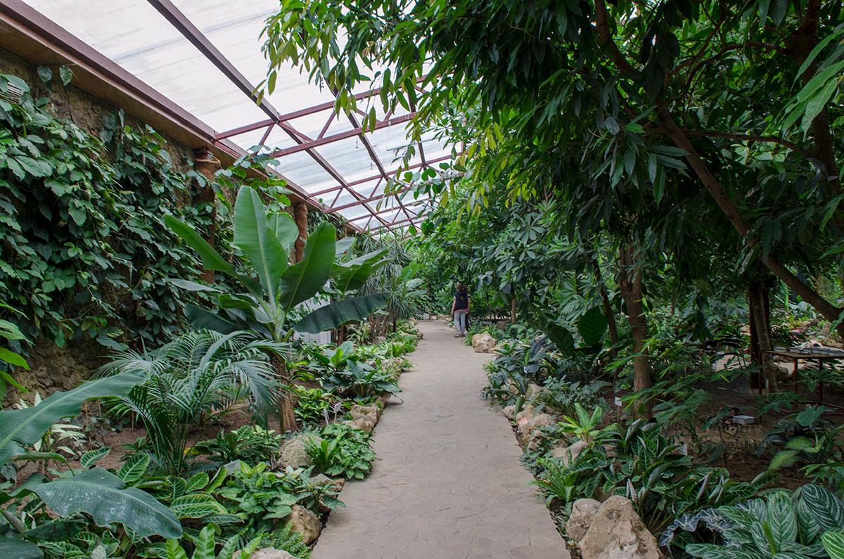 Растительность в теплом павильоне парка птиц Воробьи завезена взрослой из Нидерландов, многие виды уже плодоносят.