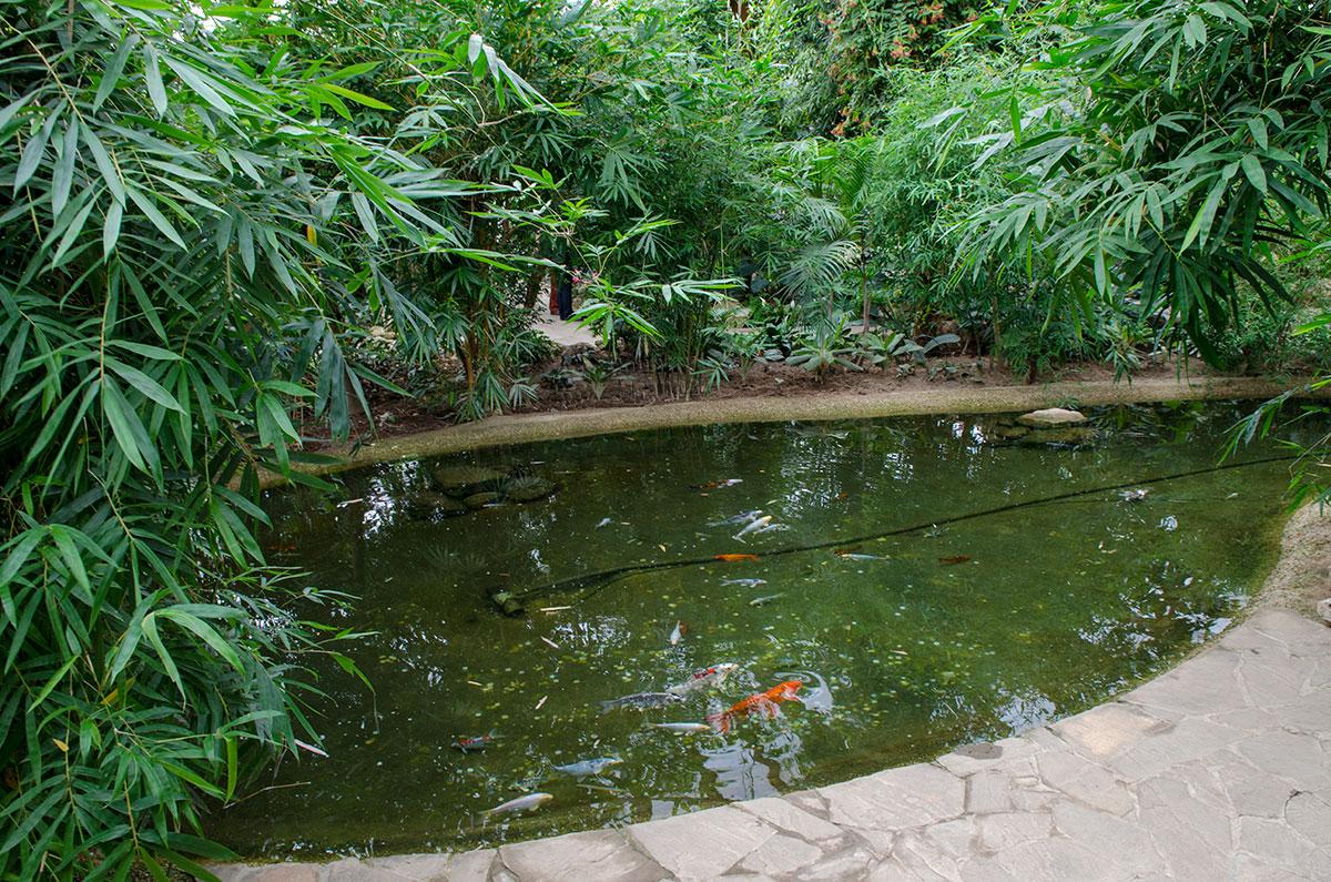 Водоем в павильоне Тропический мир как нельзя лучше подходит для теплолюбивых рыбок, обычно содержащихся в домашних аквариумах.