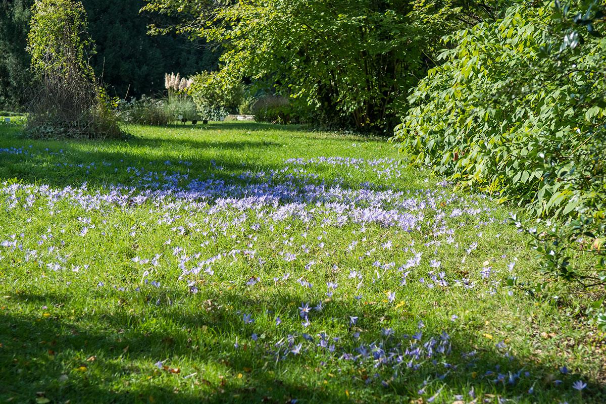 Воссоздание природных ландшафтов в естественном состоянии – одна ихз заслуг Ботанического сада Венского университета.