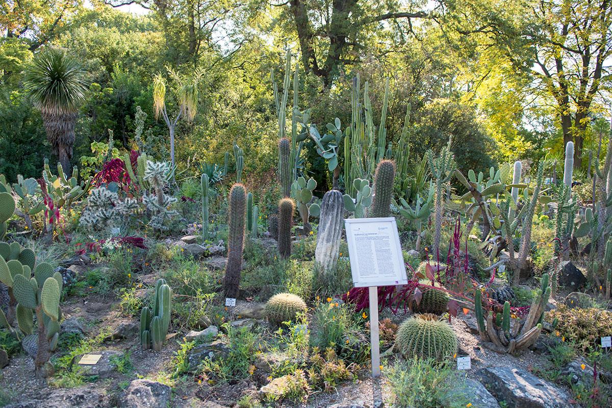 Ботанический сад Венского университета обладает обширным собранием кактусов самых разнообразных форм и размеров.