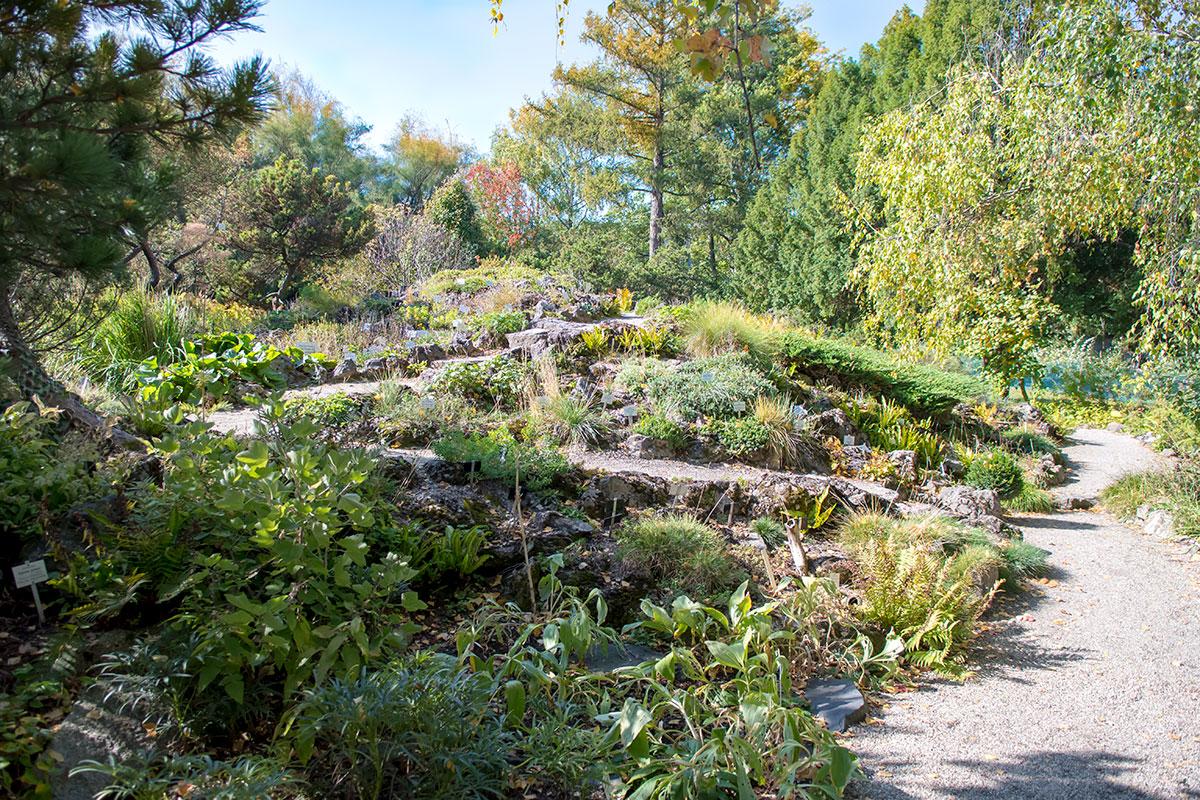 Ни один уважающий себя садик, а тем более Ботанический сад Венского университета, не может обойтись в экспозиции без альпийской горки.