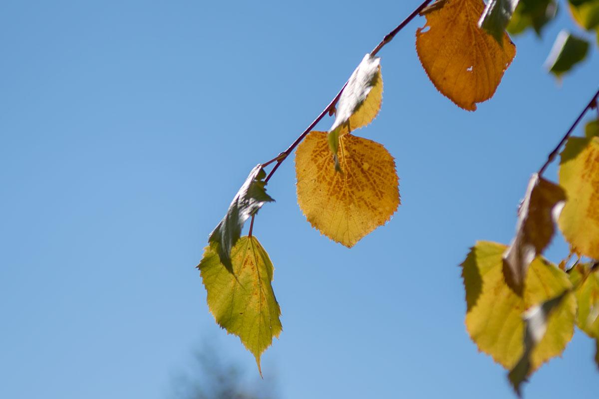 Увядающие листья деревьев в Ботаническом саду Венского университета выглядят так же печально, как в любом уголке мира.