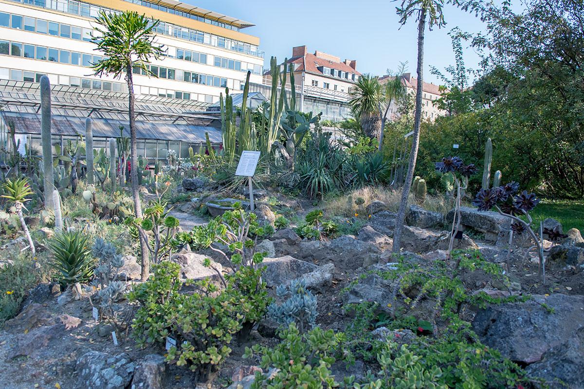 Коллекция суккулентов, сберегающих влагу растений пустынных регионов планеты, - одна из лучших экспозиций Ботанического сада Венского университета.