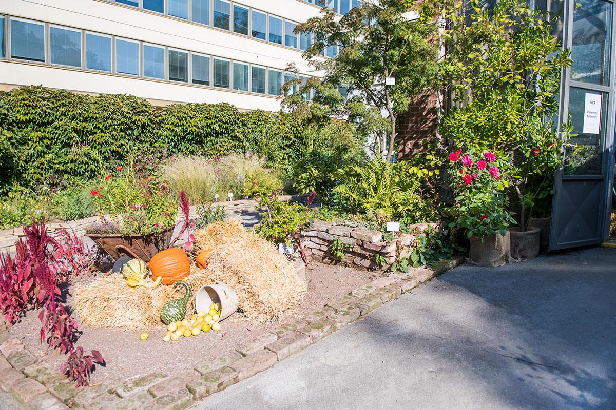 Популярные в российских школах праздники осени нашли место и в экспозиции даров полей, организованной Ботаническим садом Венского университета.