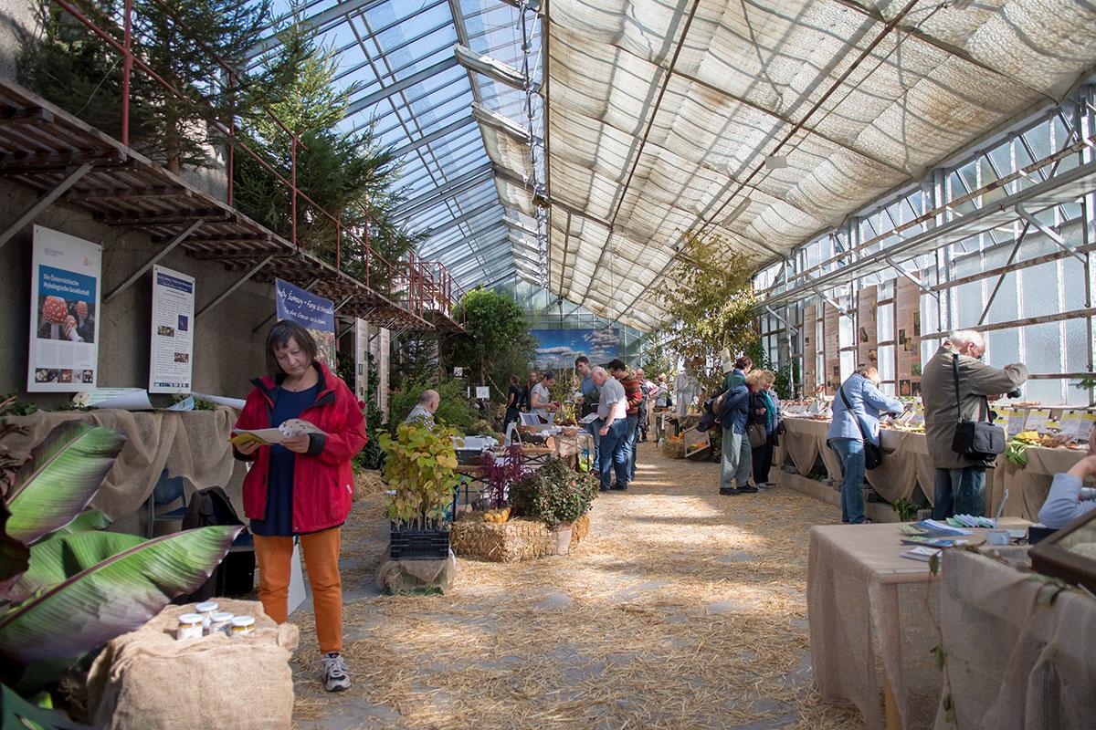 Несколько оранжерей расположено на территории Ботанического сада Венского университета, только одна выделена для массовых мероприятий.