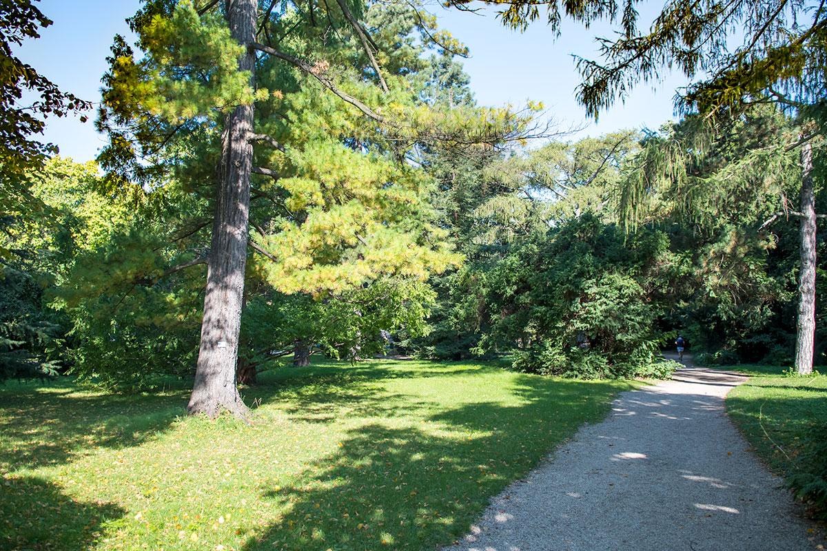 Несмотря на потери насаждений во Второй мировой войне, Ботанический сад Венского университета сохранил многие деревья векового возраста и старше.