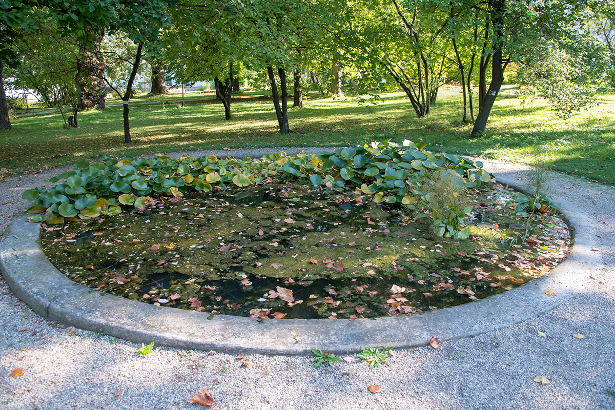 Декоративные и в то же время исследовательские водоемы на территории Ботанического сада Венского университета – место размещения водных и прибрежных растений.