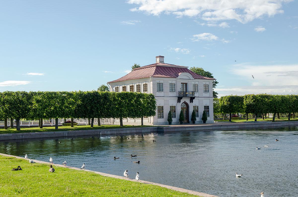Восточным фасадом дворец Марли в Петергофе выходит на Большой пруд, заселенный водоплавающими птицами, в основном здесь утки и чайки.