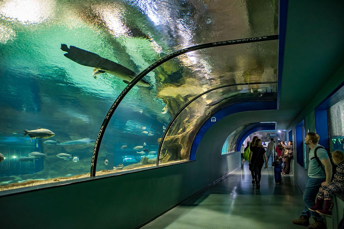 Одна из форм организации зрелищного выставочного пространства – подводные тоннели Москвариума, где посетители окружены подводными обитателями.